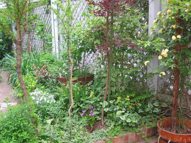 My_garden2004_5_0171