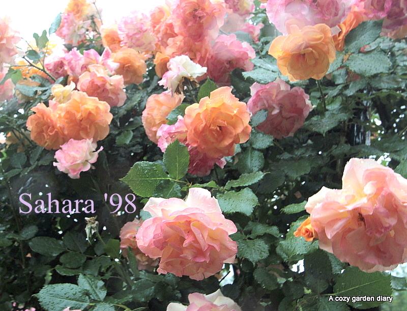 Img_55451